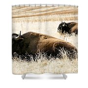 Buff And Friend 2 Shower Curtain