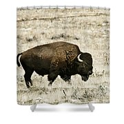 Buff Profile Shower Curtain