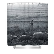 Buffalo And Monsoon Rain Shower Curtain by Anonymous