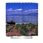 Buffalo And The Great Salt Lake Shower Curtain