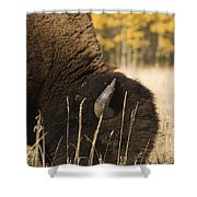 Buffalo Grazing Shower Curtain by Philippe Widling