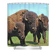 Buffalo Group II Shower Curtain