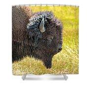 Buffalo Portrait Shower Curtain