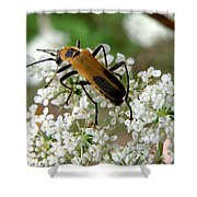 Bug And Flowers Shower Curtain
