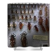 Bug Collector - So What's Bugging You Shower Curtain by Mike Savad
