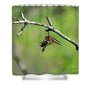 Bug Eat Bug Shower Curtain