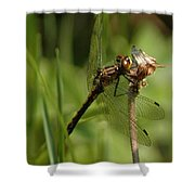 Bug Eyed Dragon Fly Shower Curtain