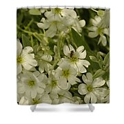 Bug On White Blooms Shower Curtain