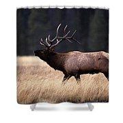 Bull Elk Cervus Elaphus Shower Curtain