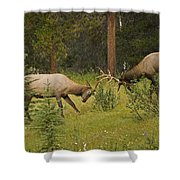 Bull Elk Fighting, Banff National Park Shower Curtain by Philippe Widling