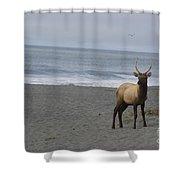Bull Elk On Calfornia Coast Shower Curtain