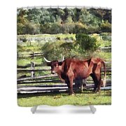 Bull In Pasture Shower Curtain by Susan Savad