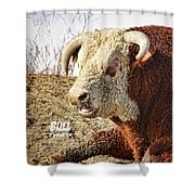 Bull It Is What It Is Shower Curtain