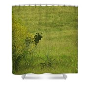 Bull Moose On The Loose  Shower Curtain