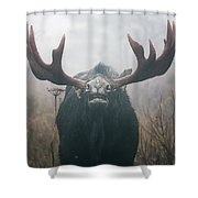 Bull Moose Testing Air For Pheromones Shower Curtain