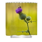 Bull Thistle With Bumble Bee Shower Curtain