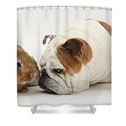 Bulldog And Lionhead-cross Rabbit Shower Curtain