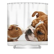 Bulldog Pup Face-to-face With Guinea Pig Shower Curtain