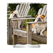 Bulldogs Relaxing At The Beach Shower Curtain