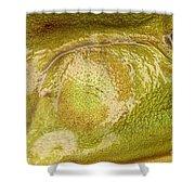 Bullfrog Ear Shower Curtain