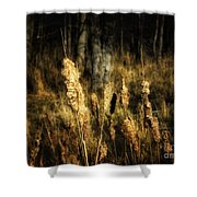 Bullrushes To Seed Shower Curtain