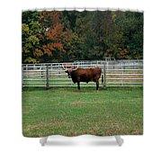 Bully Bull Shower Curtain