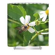Bumble Bee 1 Shower Curtain