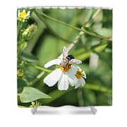Bumble Bee 2 Shower Curtain