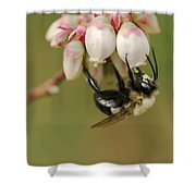 Bumble Bee And Blueberry Blossoms Shower Curtain