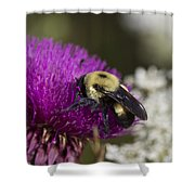 Bumble Bee And Bristle Thistle Shower Curtain