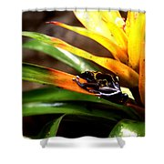 Bumble Bee Dart Frogs Shower Curtain