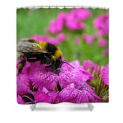 Bumble Bee Searching The Pink Flower Shower Curtain