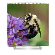 Bumblebee 2 Shower Curtain