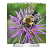 Bumblebee On A Purple Flower Shower Curtain