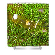 Bumblebee Shrimp On Adhesive Anemone Shower Curtain