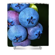 Bunch Of Blueberries Shower Curtain