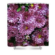 Bunch Of Chrysanths Shower Curtain
