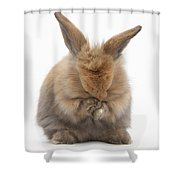 Bunny Grooming Shower Curtain