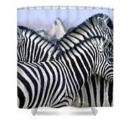 Burchells Zebra Equus Quagga Shower Curtain