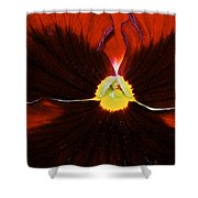 Burgandy Pansy Shower Curtain