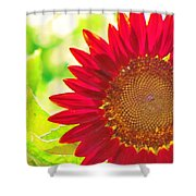Burgundy Sunflower Shower Curtain