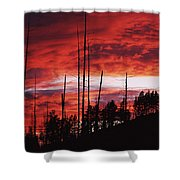 Burnt Trees Against A Sunset Shower Curtain