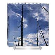 Burnt Trunks Of Black Spruce, Boggy Shower Curtain by Darwin Wiggett