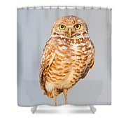 Burrowing Owl V Shower Curtain
