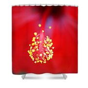 Bursting Towards You Shower Curtain