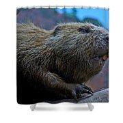 Busy Beaver Shower Curtain