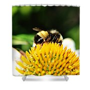 Busy Bee Collecting On Echinacea Pow Wow Shower Curtain