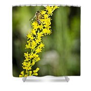 Busy Bee On Yellow Wildflower Shower Curtain