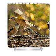 Busy Birds Shower Curtain