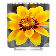 Butter And Jam Shower Curtain